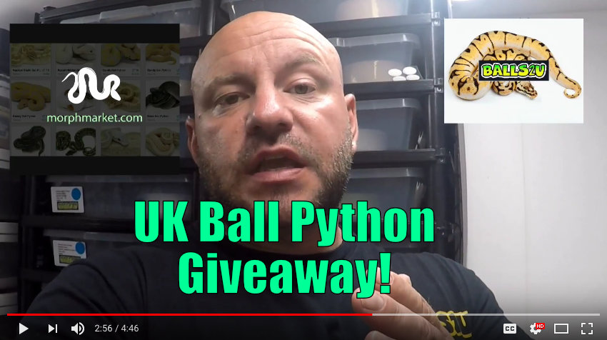 UK Ball Python Giveaway