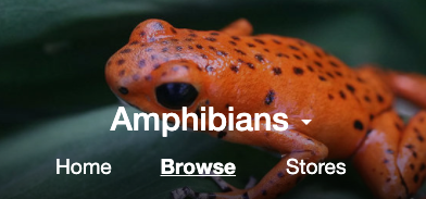 Amphibian Categories Added